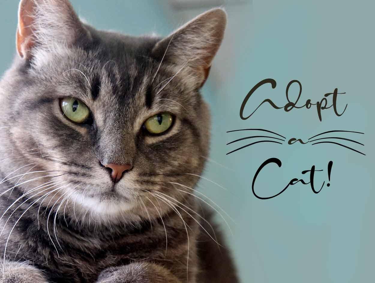 adopt-a-cat