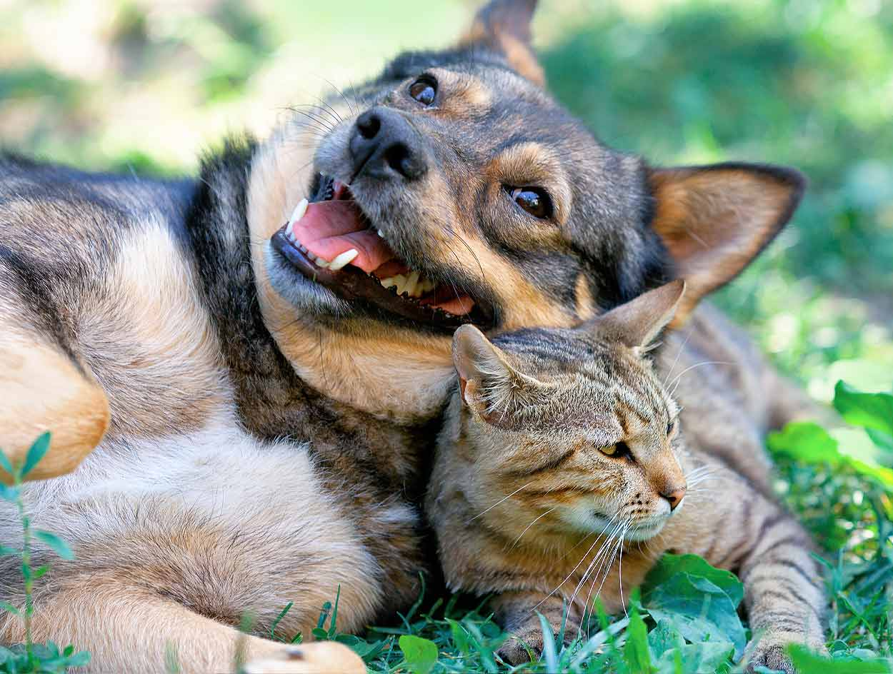 dog-cat-together